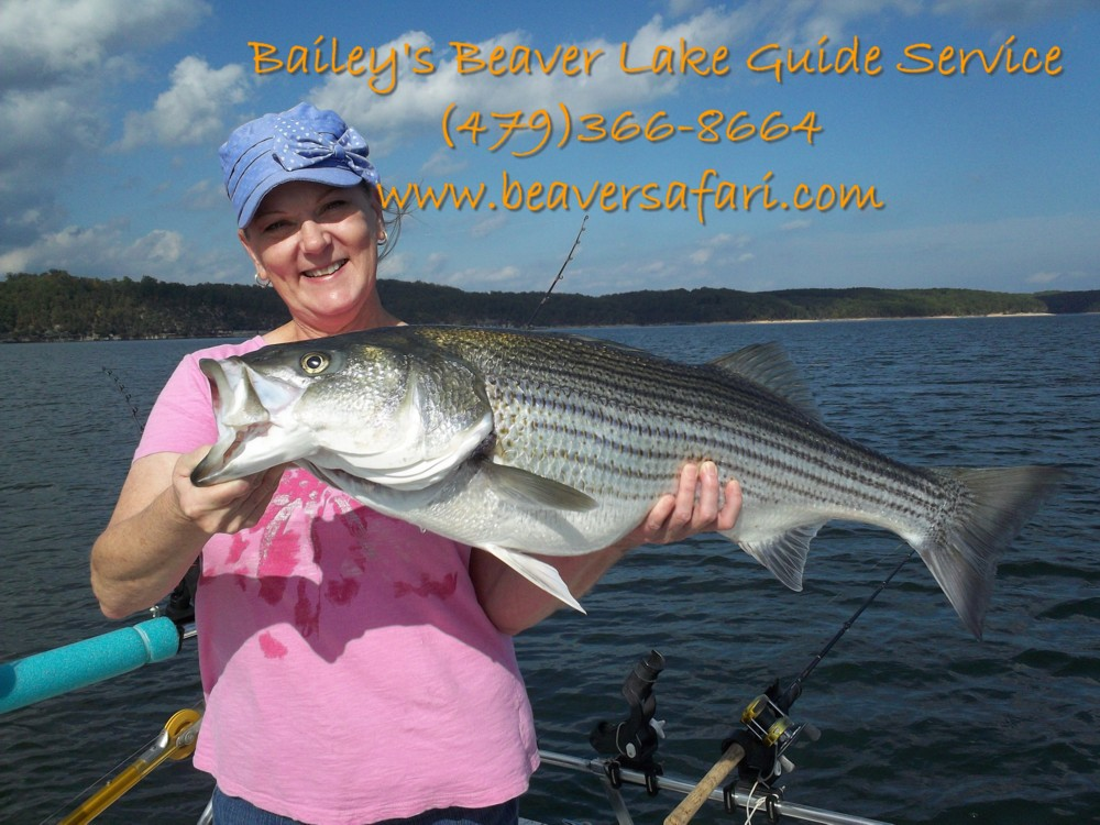Striper fishing guide service for Beaver lake striper fishing