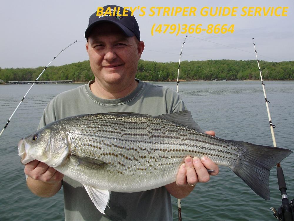 beaver lake striper fishing guide service