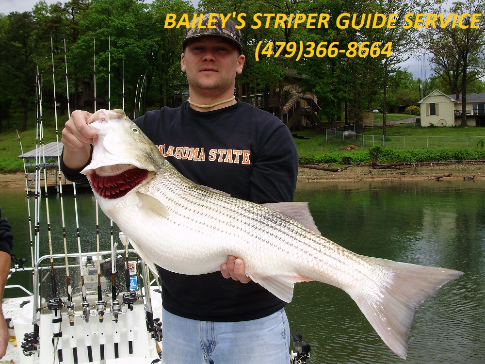 Beaver lake striper fishing guide service for Beaver lake striper fishing