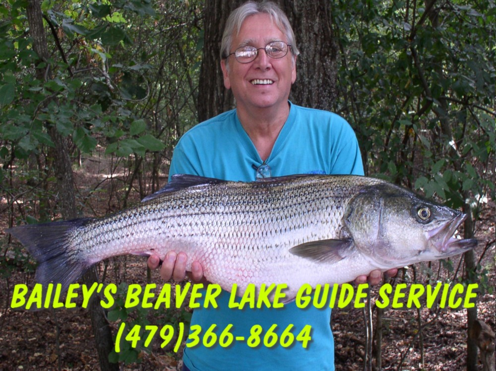 Beaver lake guide for Beaver lake striper fishing
